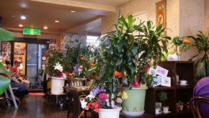 喫茶ツヅキ 内装 花が多い